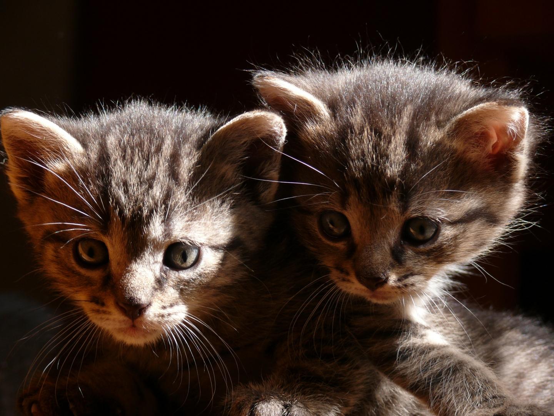 Katzenkids