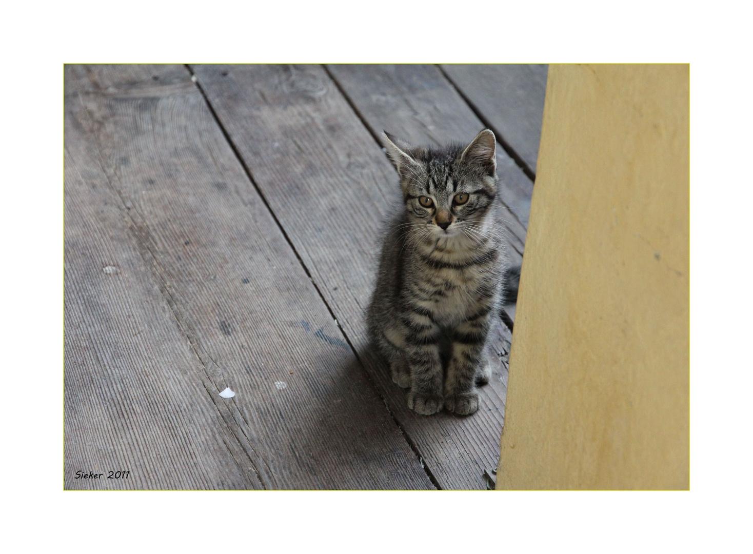 Katzenkind in Glurns ...