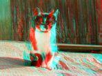 Katzenkinder-der Vierte im Bunde
