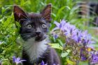 ...Katzenkinder entdecken den Sommer...