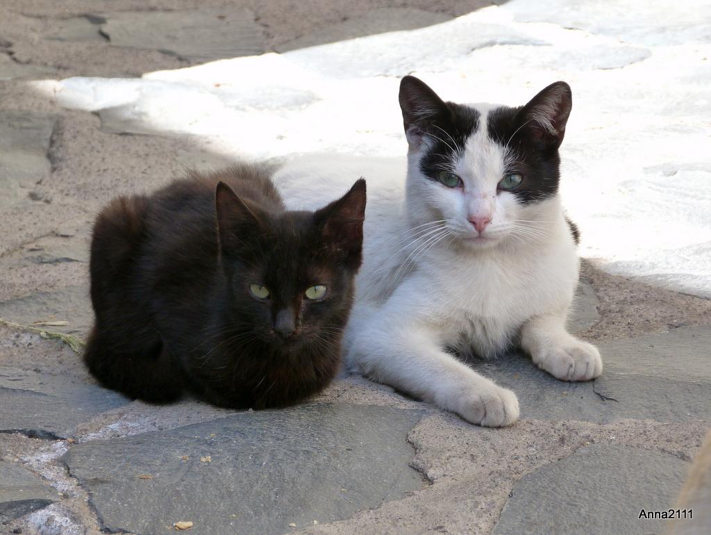 KatzenKinder haben meine Hündin genau im Visier