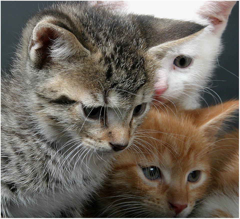 Katzenkinder im Studio