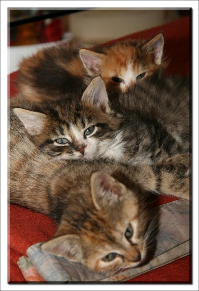 Katzenkinder_2