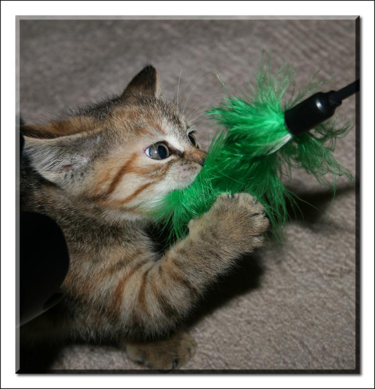 Katzenkinder_3