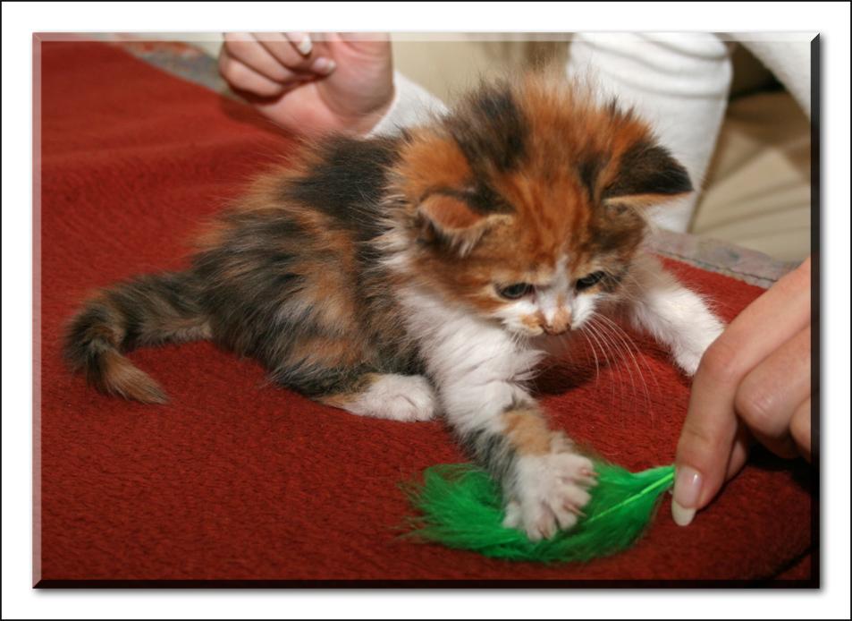 Katzenkinder_5