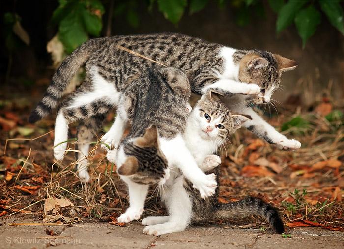 Katzenknoten