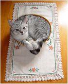 Katzenkörbchen