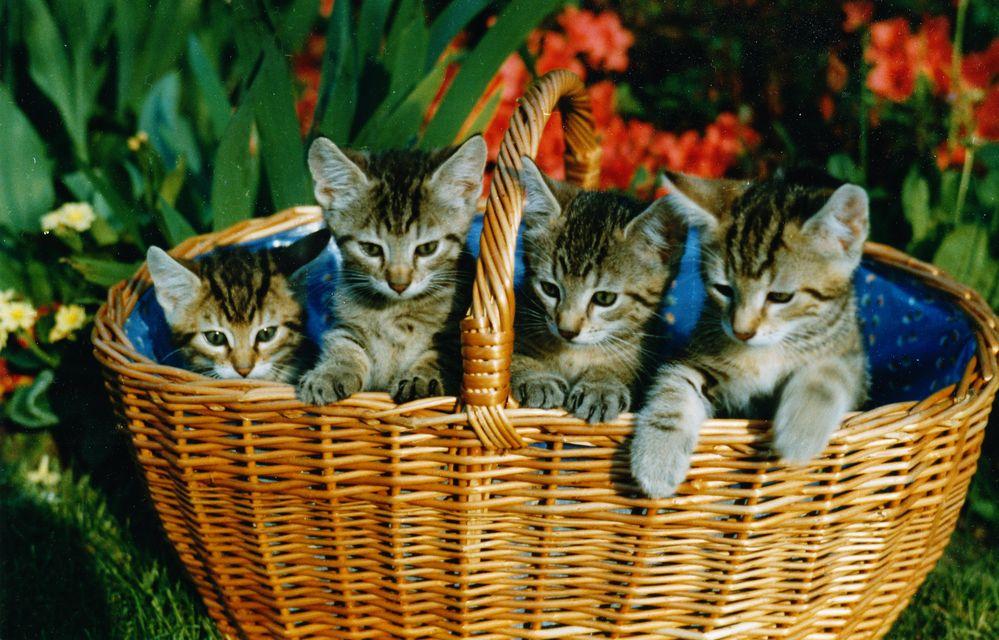 Katzenkorb von tintinschatz