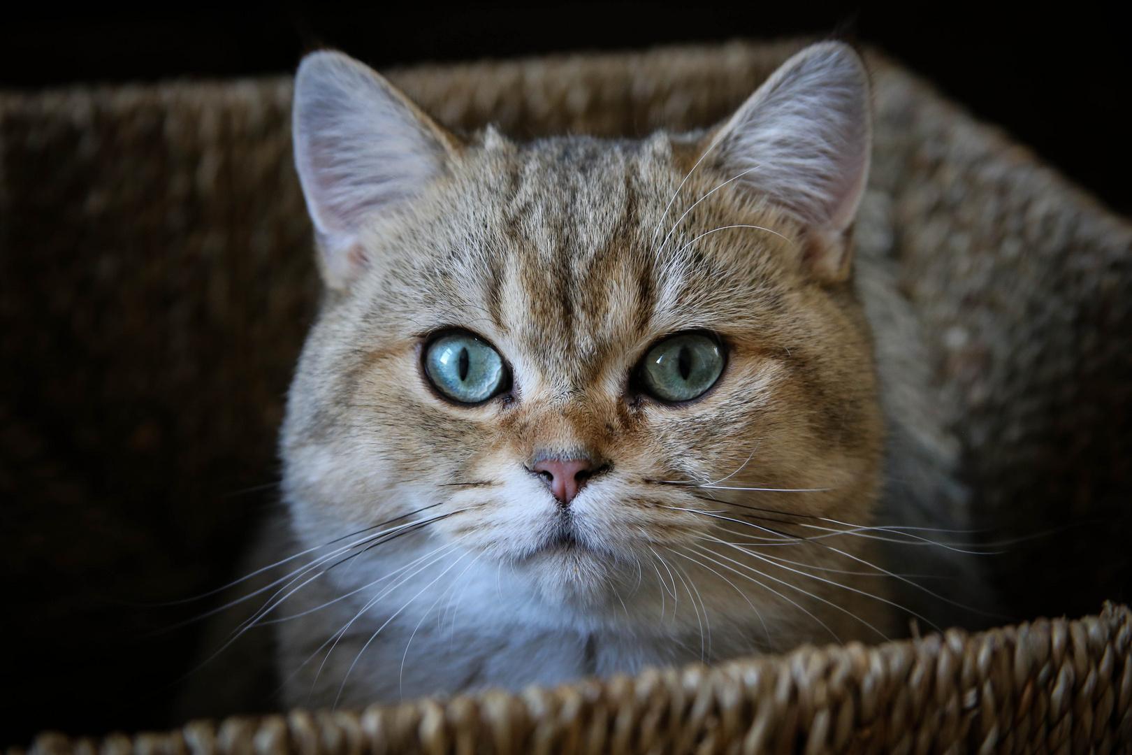 Katzenkorb