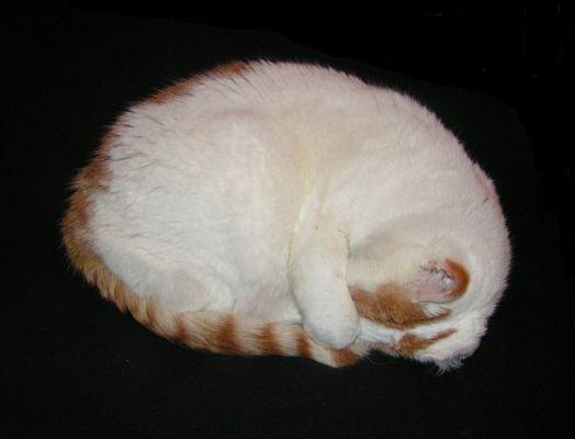 Katzenkugel-Kugelkatze