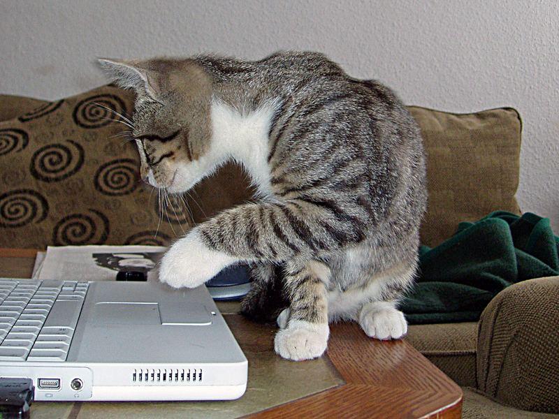 Katzenleichte Computerbedienung