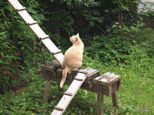 Katzenleiter