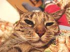 Katzenmakro
