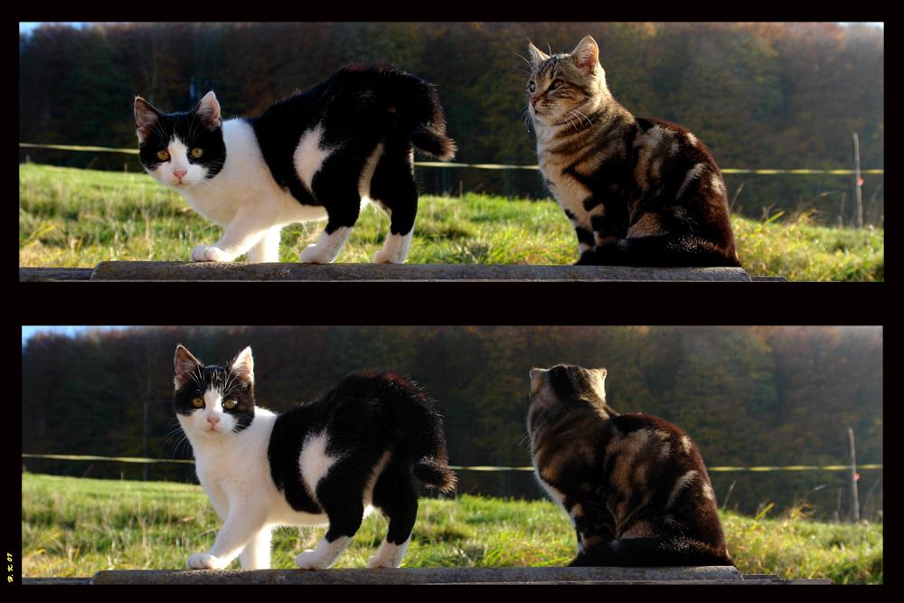 Katzenmodels auf dem Laufsteg:-)
