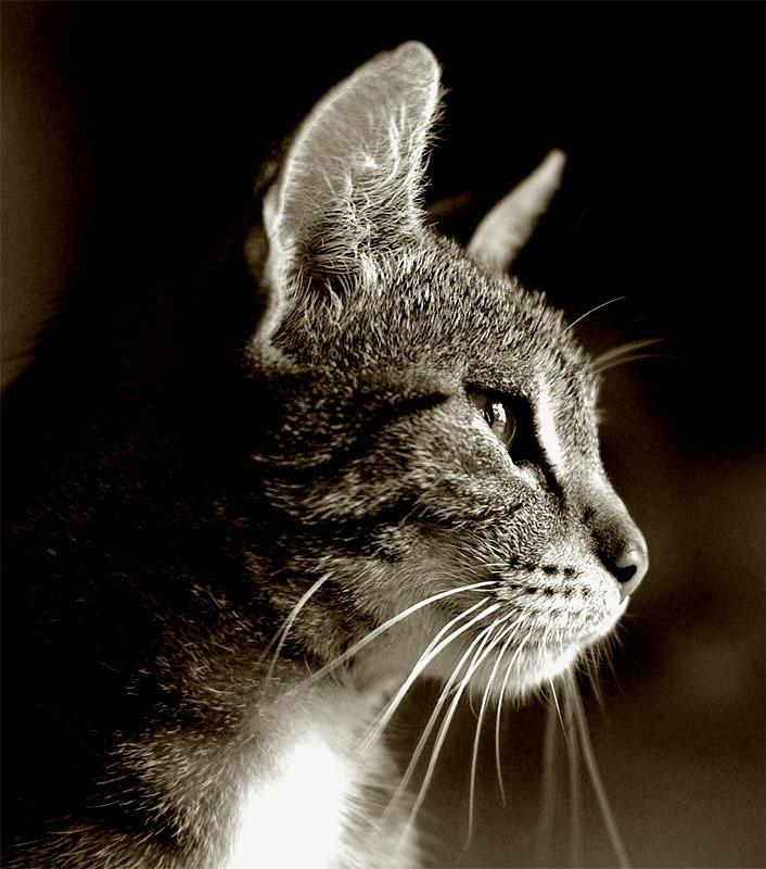 Katzenmutter