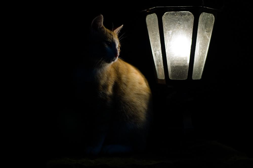 Katzennacht