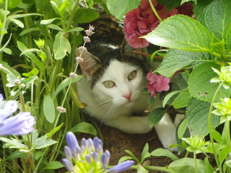 Katzenparadies