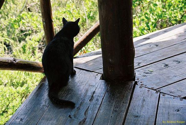 Katzenparadies auf Cuba