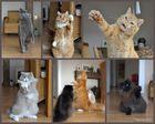 Katzen°PARTY°