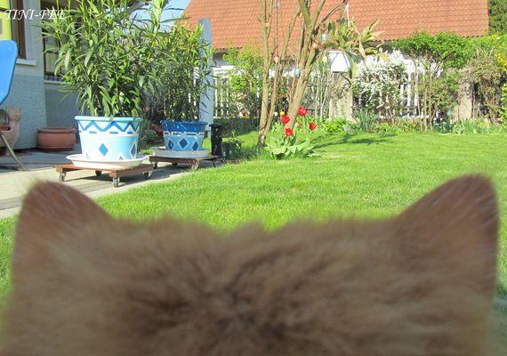 Katzenperspektive
