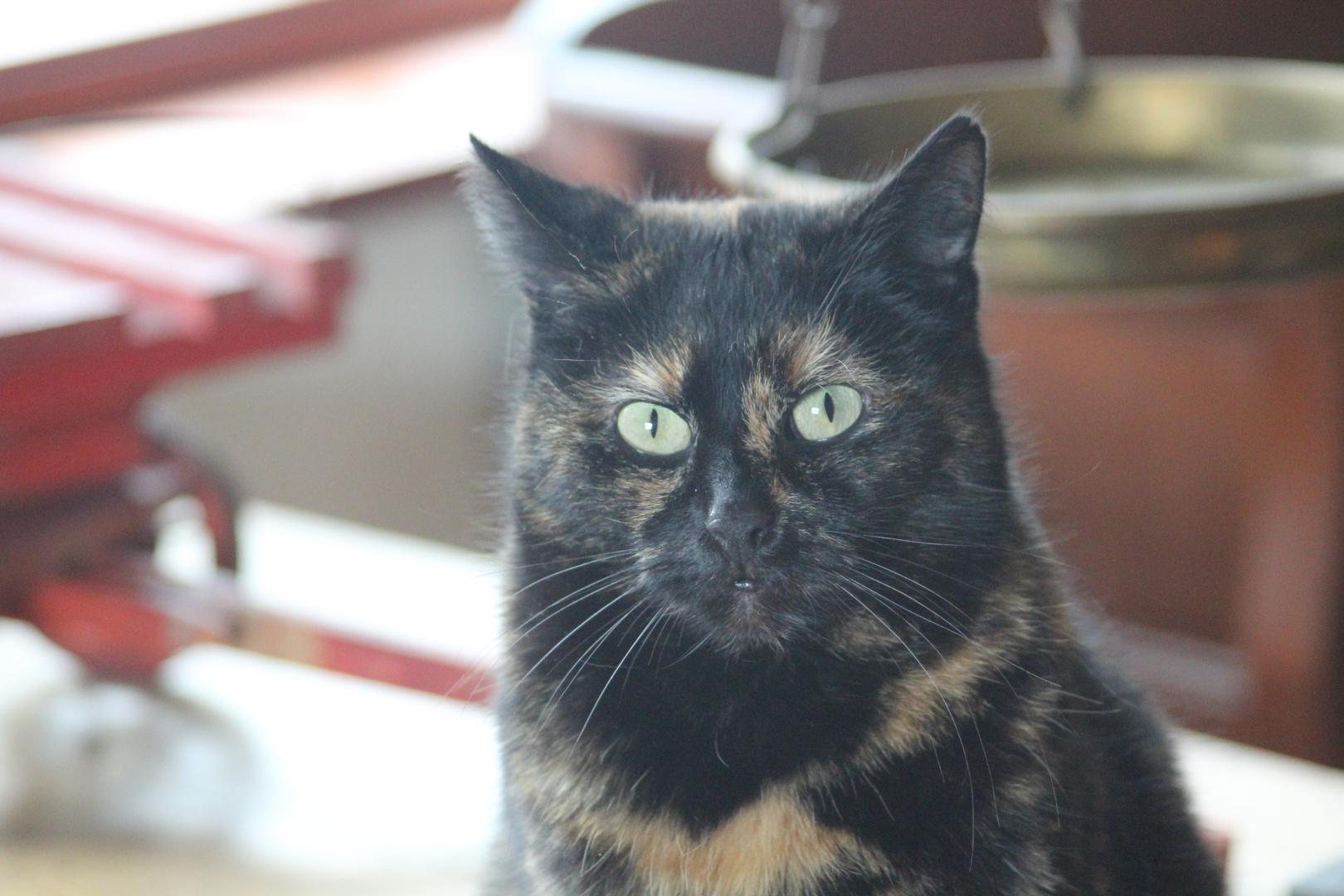 Katzenporträt