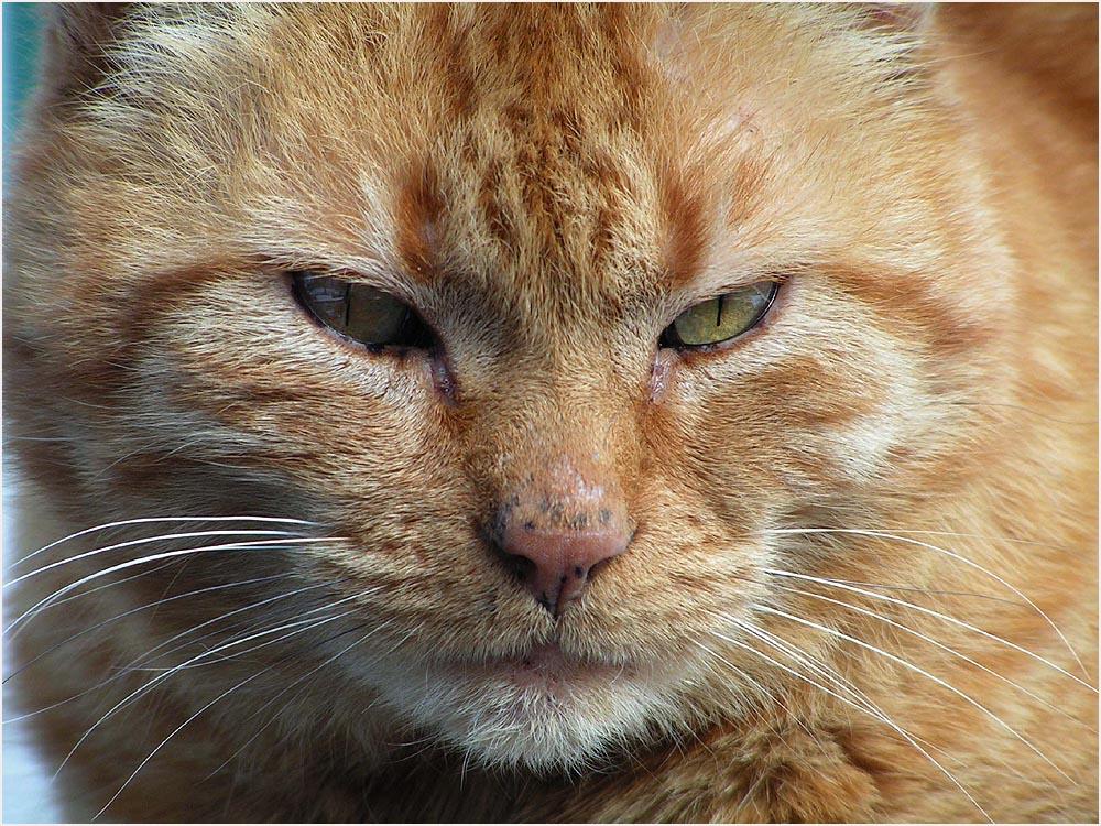 Katzenportrait....