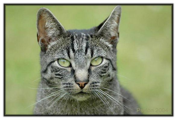 Katzenportrait!