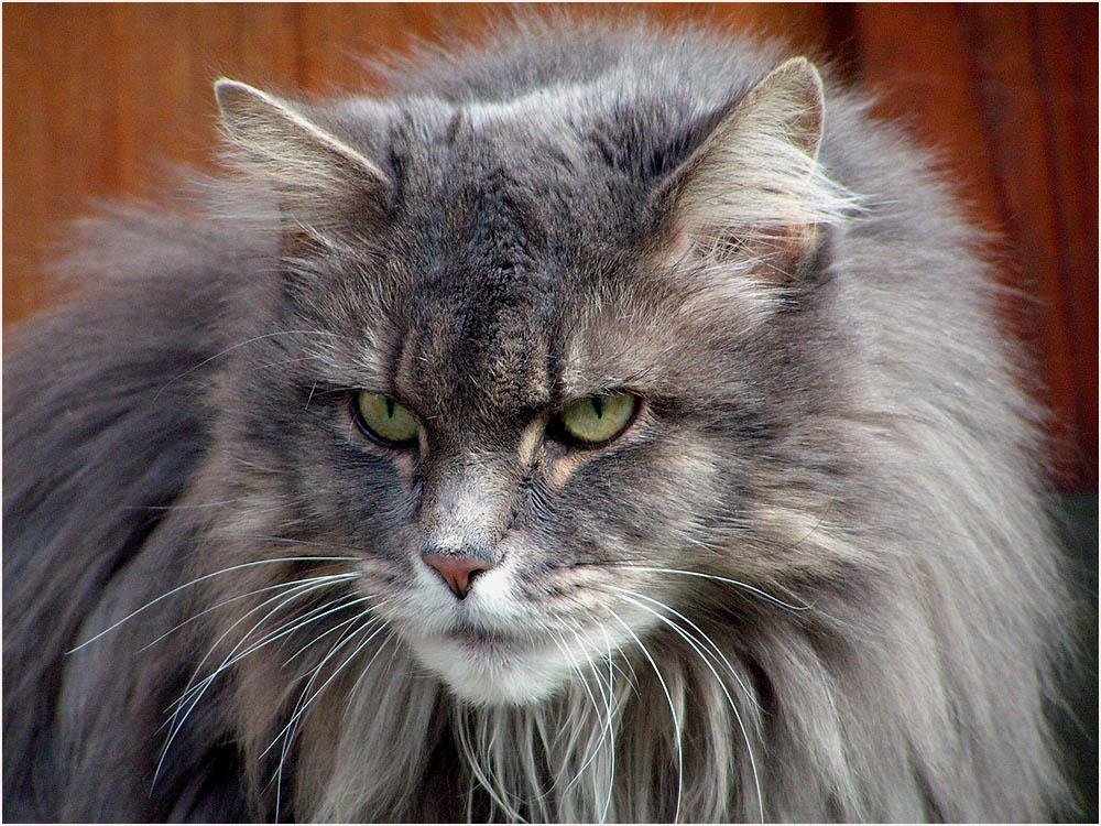 Katzenportrait....2