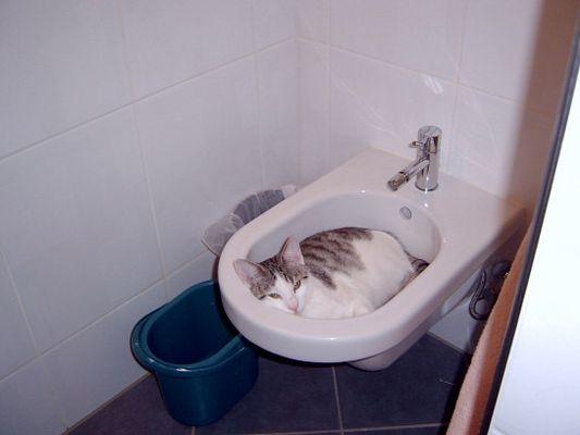 Katzenreinlichkeit