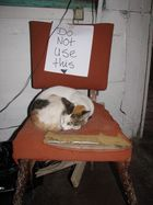 Katzenrevolte