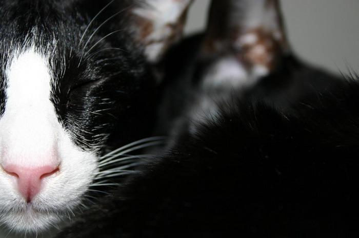 Katzensalat