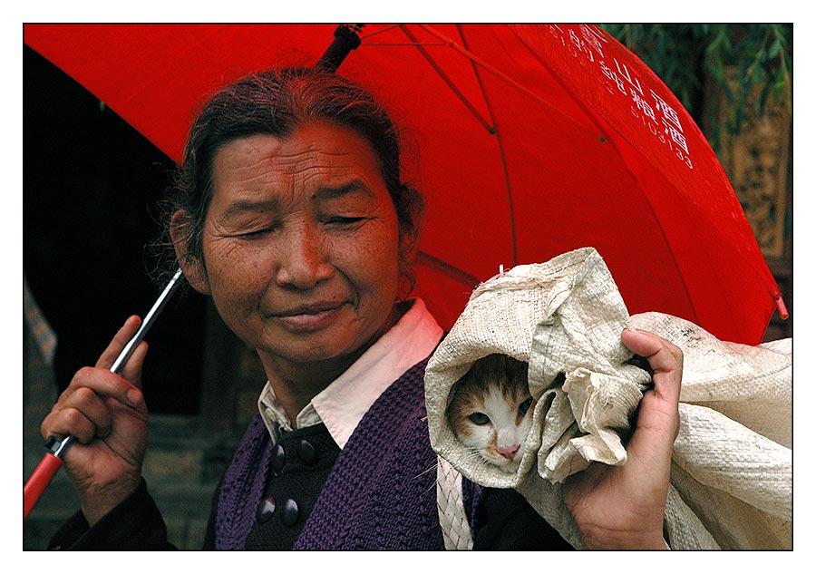 Katzenschirm