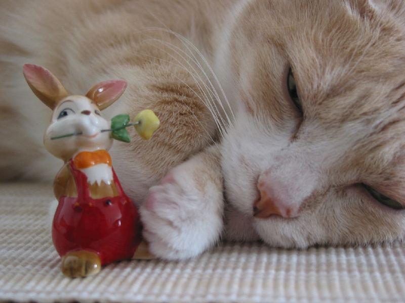 Katzenschlaf