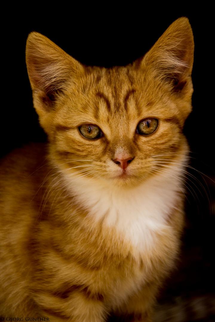 Katzenschmaus