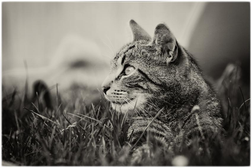- Katzenseele -