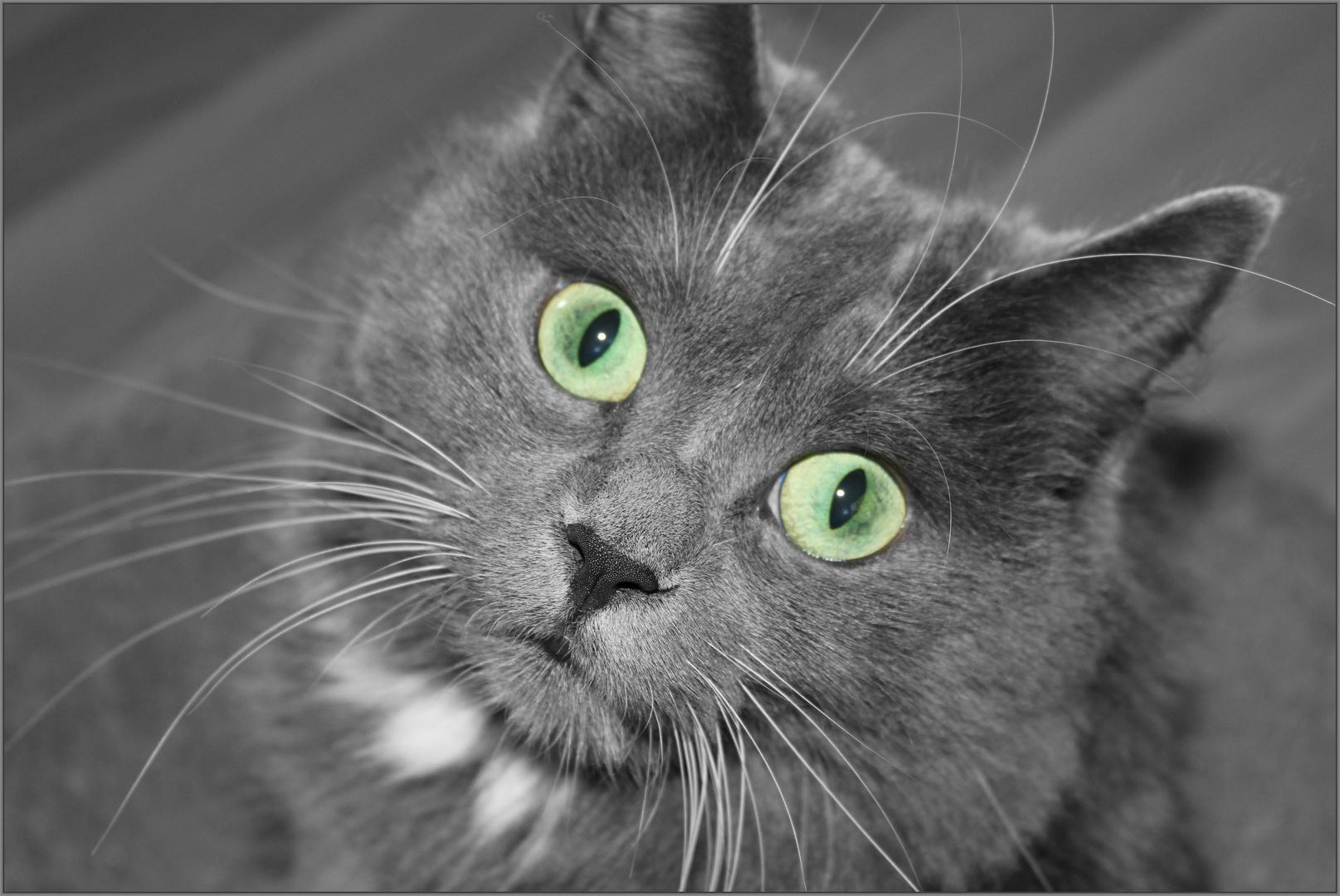 Katzensmaragd