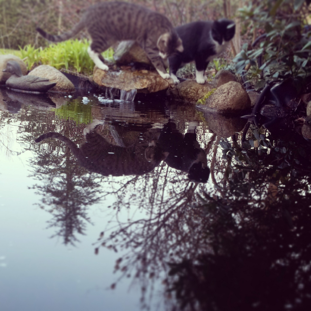 Katzenspiegel