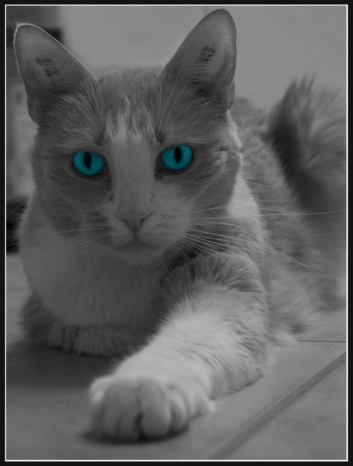 Katzenspiele