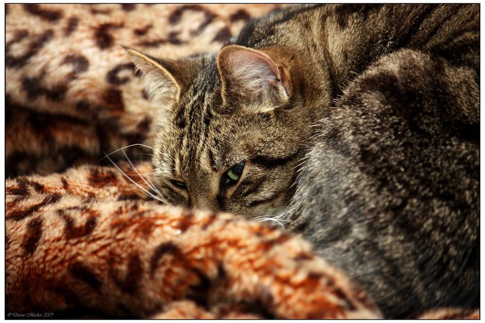 Katzensuchbild