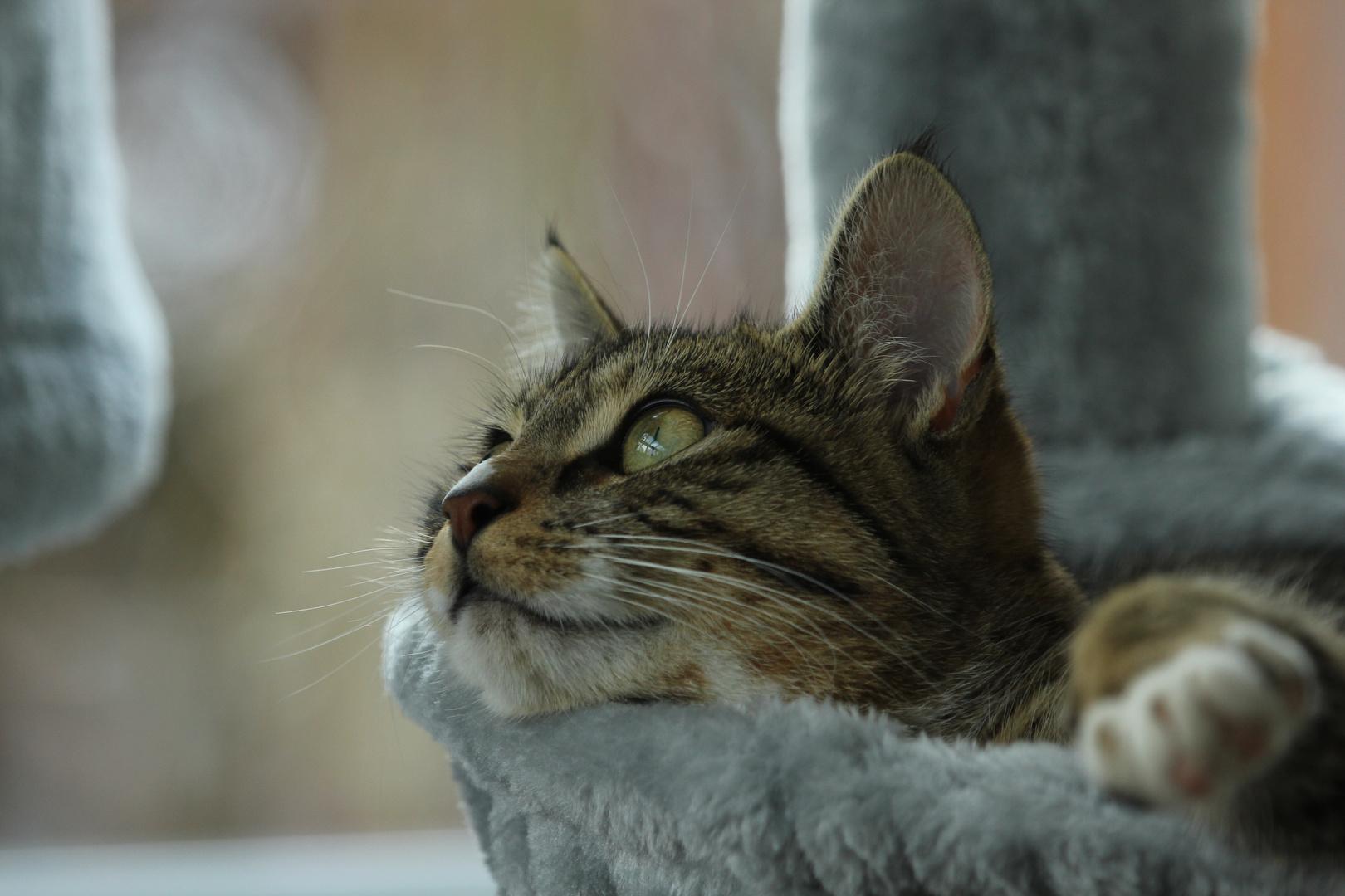 Katzenträume....