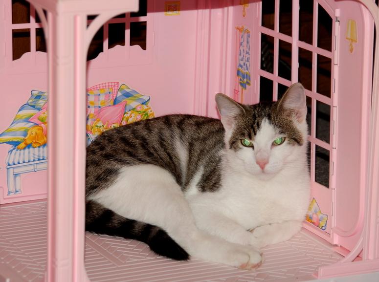 Katzenträume in Rosa.......