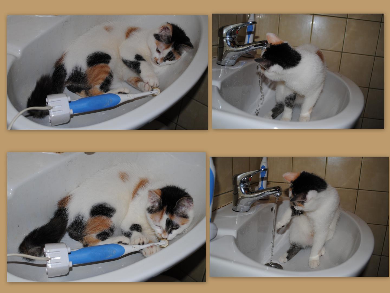 Katzenwäsche ?