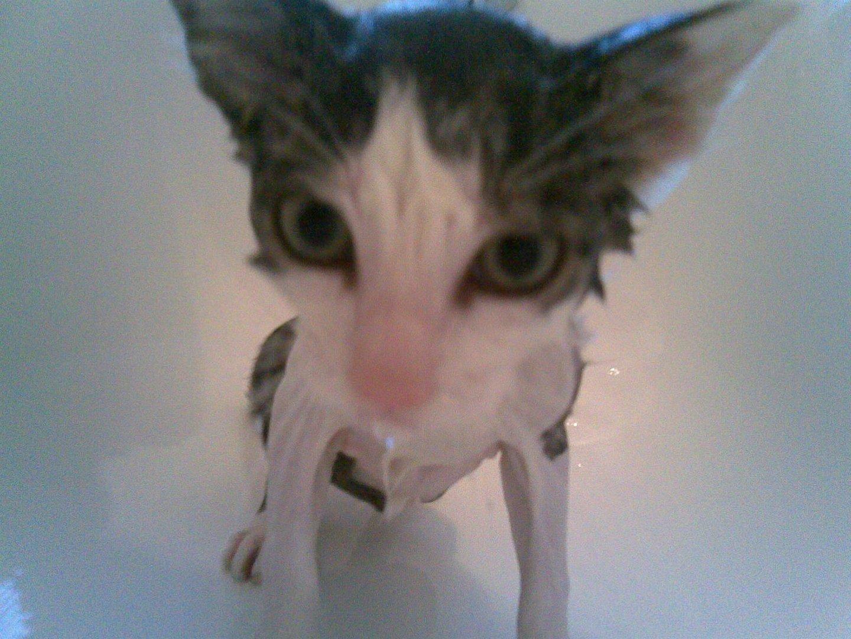 Katzenwäsche - erstes Bad unseres Katers