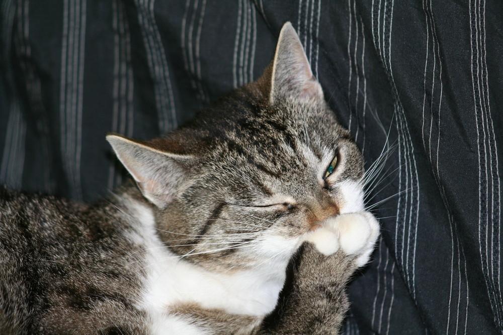 Katzenwäsche IV