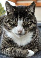 Katzinator