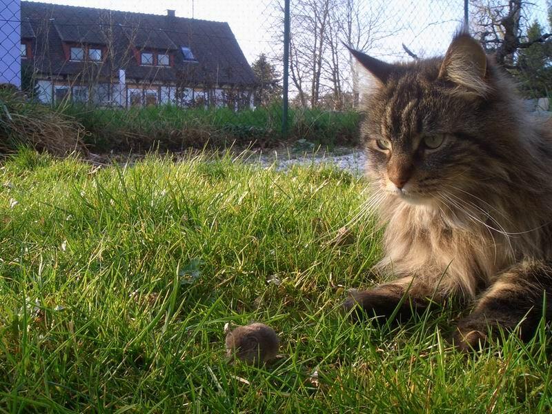 Katz&Maus