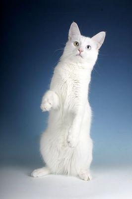 Katzninchen