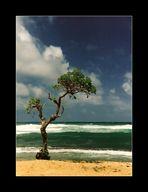 Kauai - Paradise on Earth