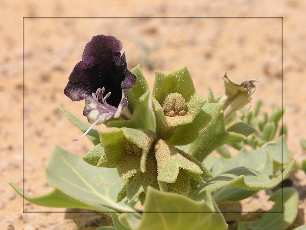 Kaum hat es in der Sahara ein paar Regentropfen gegeben...