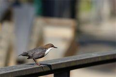 Kaum sind die Kinder aus dem Nest...tanzen die Alten auf dem Geländer ...